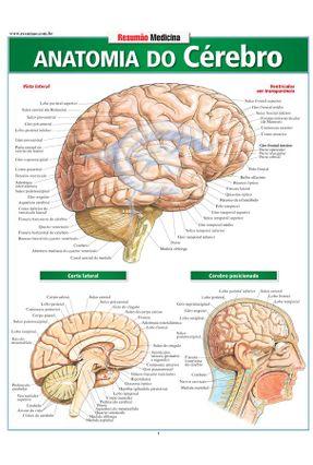 Resumão Medicina - Anatomia do Cérebro - Perez,Vicent pdf epub